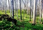 Lasy w rezerwacie