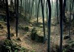 Las wokół ruin