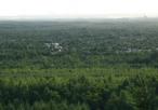 Zarośnięta południowa część Pustyni Błędowskiej widziana z wzgórza Czubatka. W tle zarys Huty Katowice; nieco po prawej kościół w Błędowie.