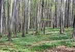 Las w rezerwacie Parkowe