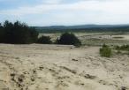 Pustynia Błędowska w okolicach Chechła