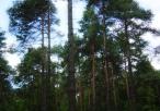 Drzewa w rezerwacie Borek