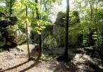 Las wokół Bramy Twardowskiego