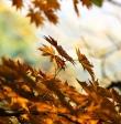Kraków jesienią też jest piękny! Poznaj najlepsze rodzinne atrakcje