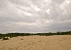 Pustynia Siedlecka - roślinność pustynna