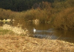 Ptactwo wodne w rejonie