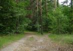 Okolice rezerwatu Borek - leśny trakt