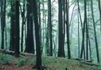 Lasy rezerwatu