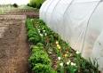 Nasz ekologiczny ogródek