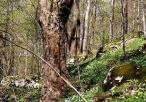 Roślinność na terenie rezerwatu
