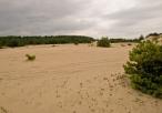 Widok na Pustynie Siedlecką