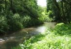 Rzeka Dłubnia w parku krajobrazowym
