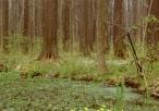 Rezerwat Stawki