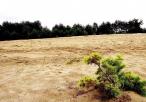 Roślinność na Pustyni Siedleckiej